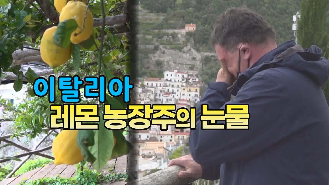 [세상만사] 이탈리아 레몬 농장주의 눈물