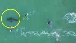 물놀이하는 사람 '먹이'로 인식하고 맴도는 상어 드론에 포착