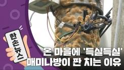 [15초 뉴스] 온 마을에 '득실득실'...매미나방이 판을 치는 이유
