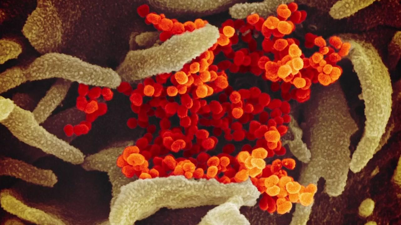 광주 지역 코로나19 확산, 변종 바이러스가 원인일까?