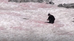 분홍빛에 달콤한 냄새...알프스 '수박 눈'의 정체는?