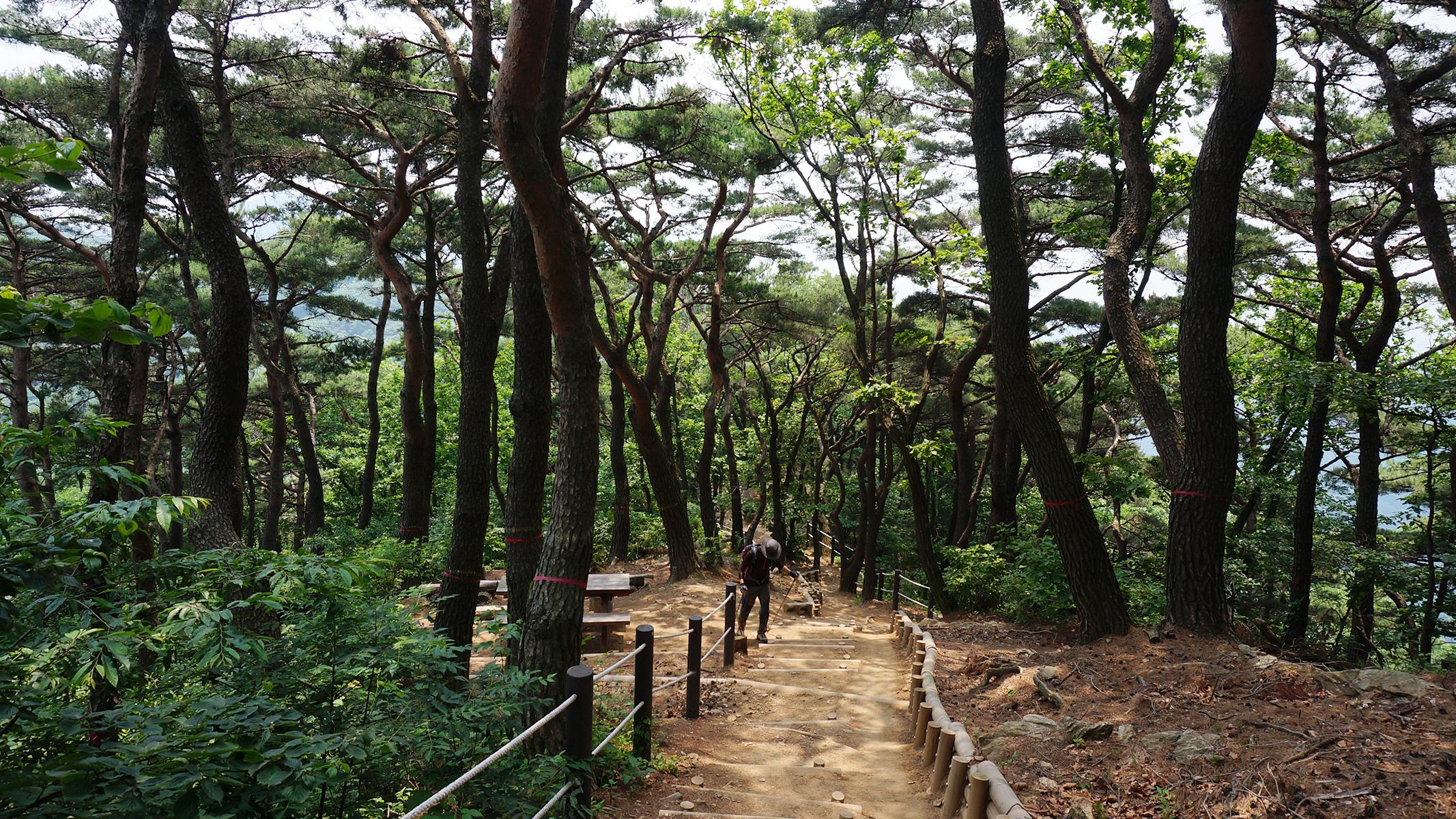 [산행 포인트] 푸른 숲 맑은 계곡, 청계산