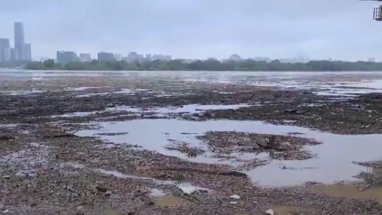 흙·나무·쓰레기 '둥둥'...처참한 한강 하류 모습