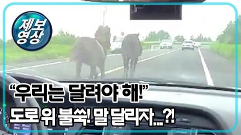 """[제보영상] """"말 달리자?!""""…도로 위에 불쑥 나타난 말 한 쌍"""