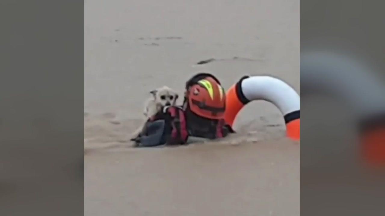 놀란 표정으로 구조되는 강아지...남부 호우 피해 속출