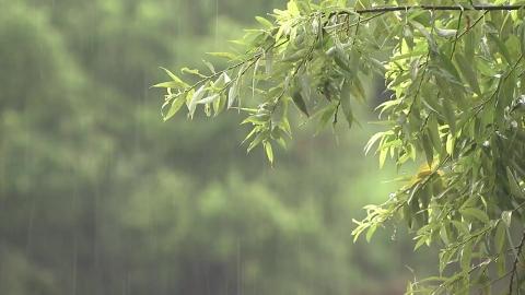[날씨] 오늘 장마 소강…내륙 더위 속 강한 소나기