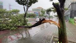 [취재N팩트] 세력 키우는 9호 태풍 '마이삭'...최악 태풍 되나