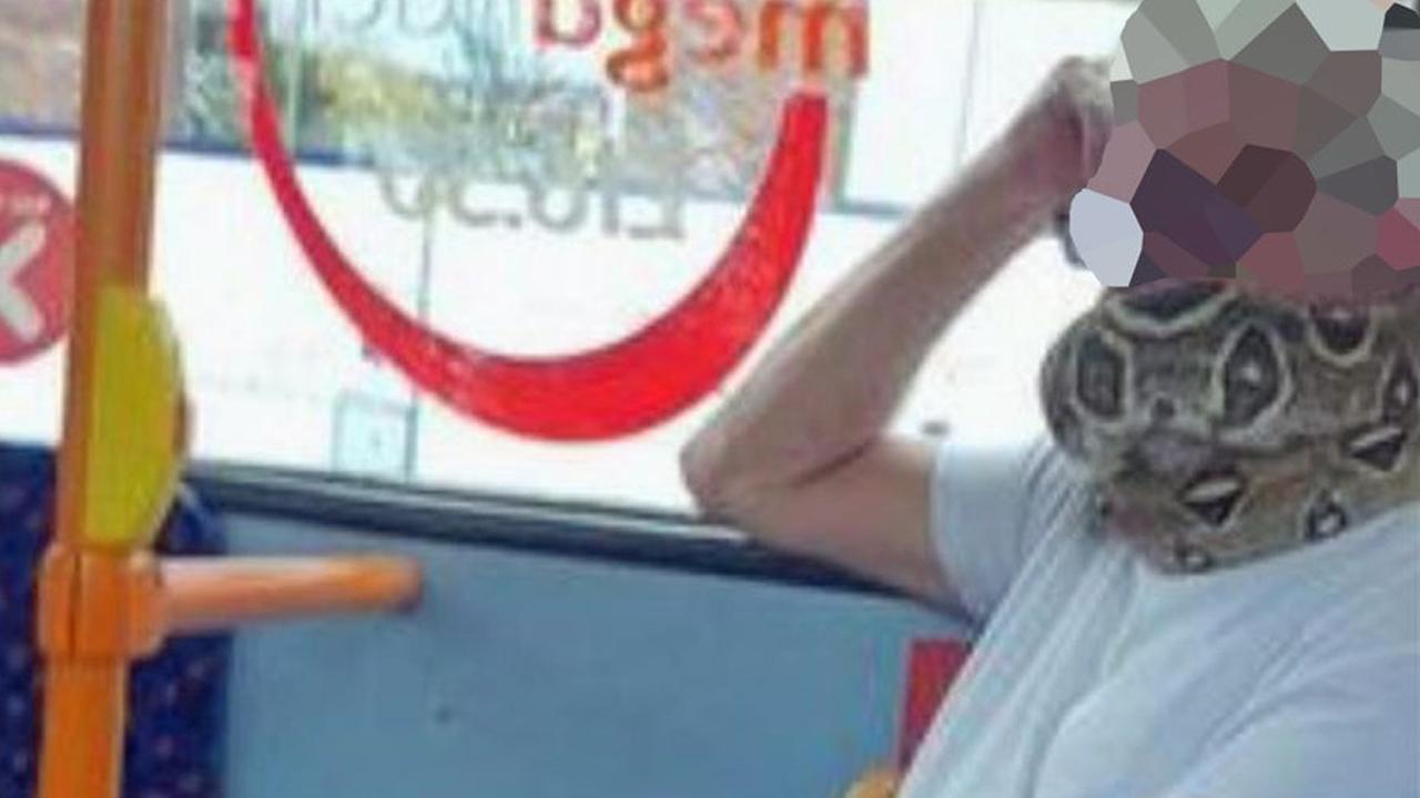 마스크 대신 '살아있는 뱀' 두르고 버스 탄 英 승객
