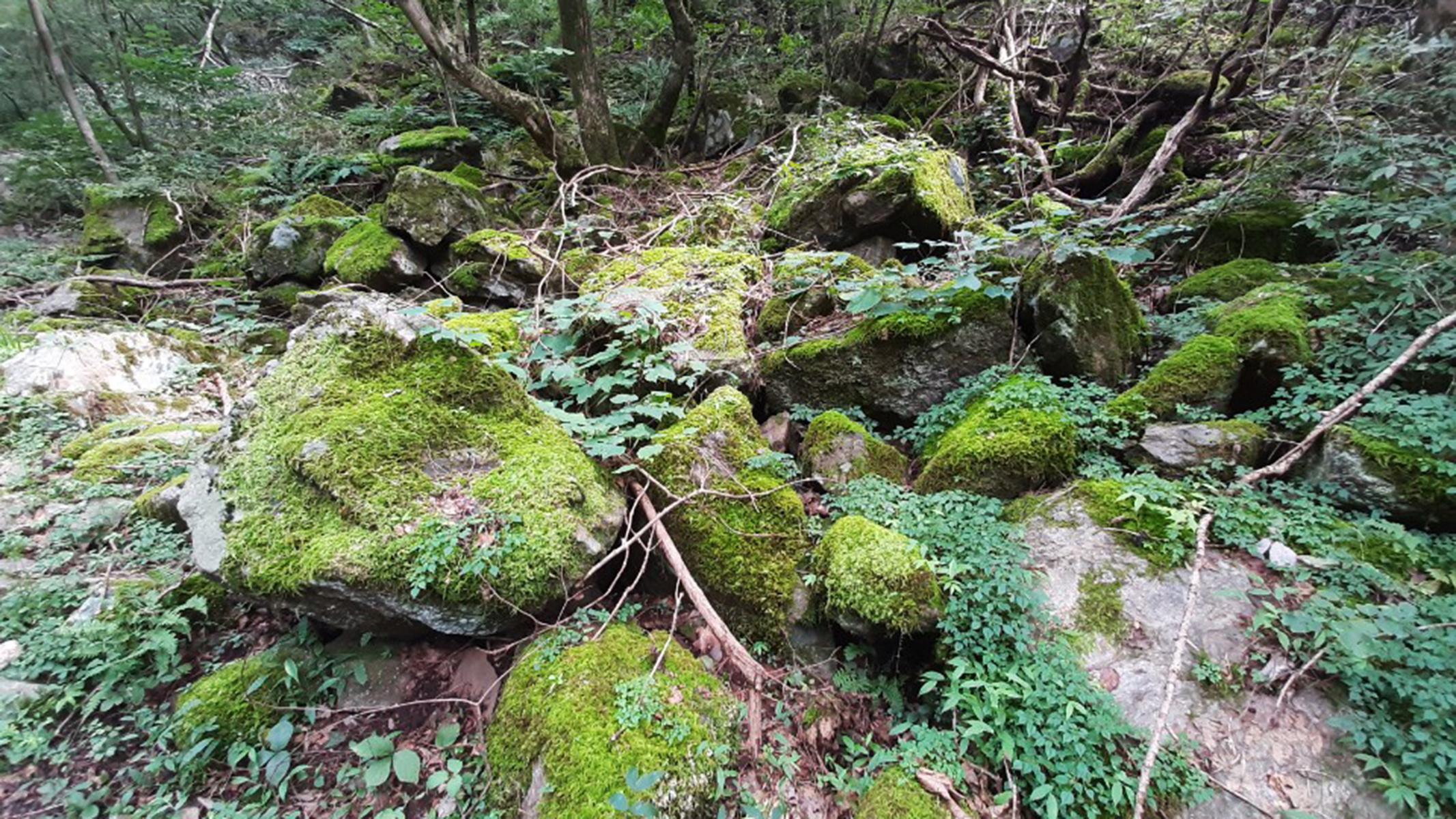 [산행포인트] 이끼계곡과 함께 한 '화야산' 트레킹