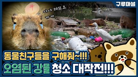 [구루마블] 카피바라가 화났다! 쓰레기로 뒤덮인 강물, 원인은 부족한 하수처리시설