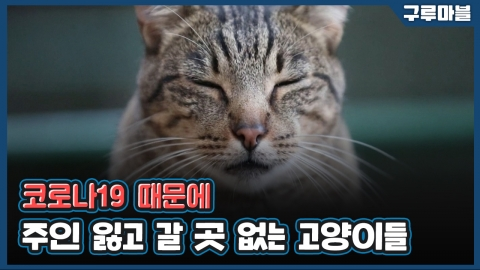 [구루마블] 코로나19로 주인 잃은 고양이들의 쉼터