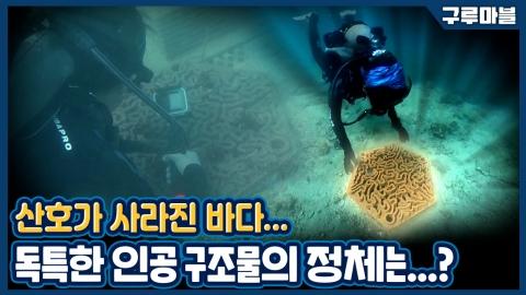 [구루마블] 성공률 100%?! 사라진 산호초를 되살리기 위한 비장의 무기