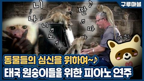 [구루마블] 원숭이를 불러모으는 피아노 치는 사나이, 그의 정체는?