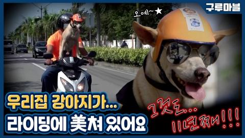 [구루마블] 전국 일주가 꿈, 오토바이 타는 강아지