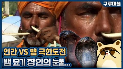 [구루마블] 코에 뱀을 넣었다 뺐다, 파키스탄 뱀 묘기 장인들
