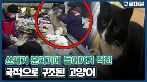 [구루마블] 봉투에 담겨있다가... 폐기물 처리장에서 구조된 고양이