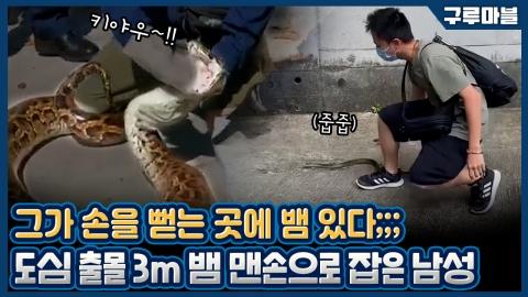 [구루마블] 뱀계의 강형욱 등장, 야생 뱀들의 안전을 책임진다!