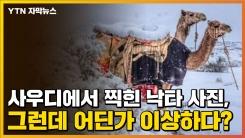[자막뉴스] 사우디에서 찍힌 낙타 사진, 그런데 어딘가 이상하다?