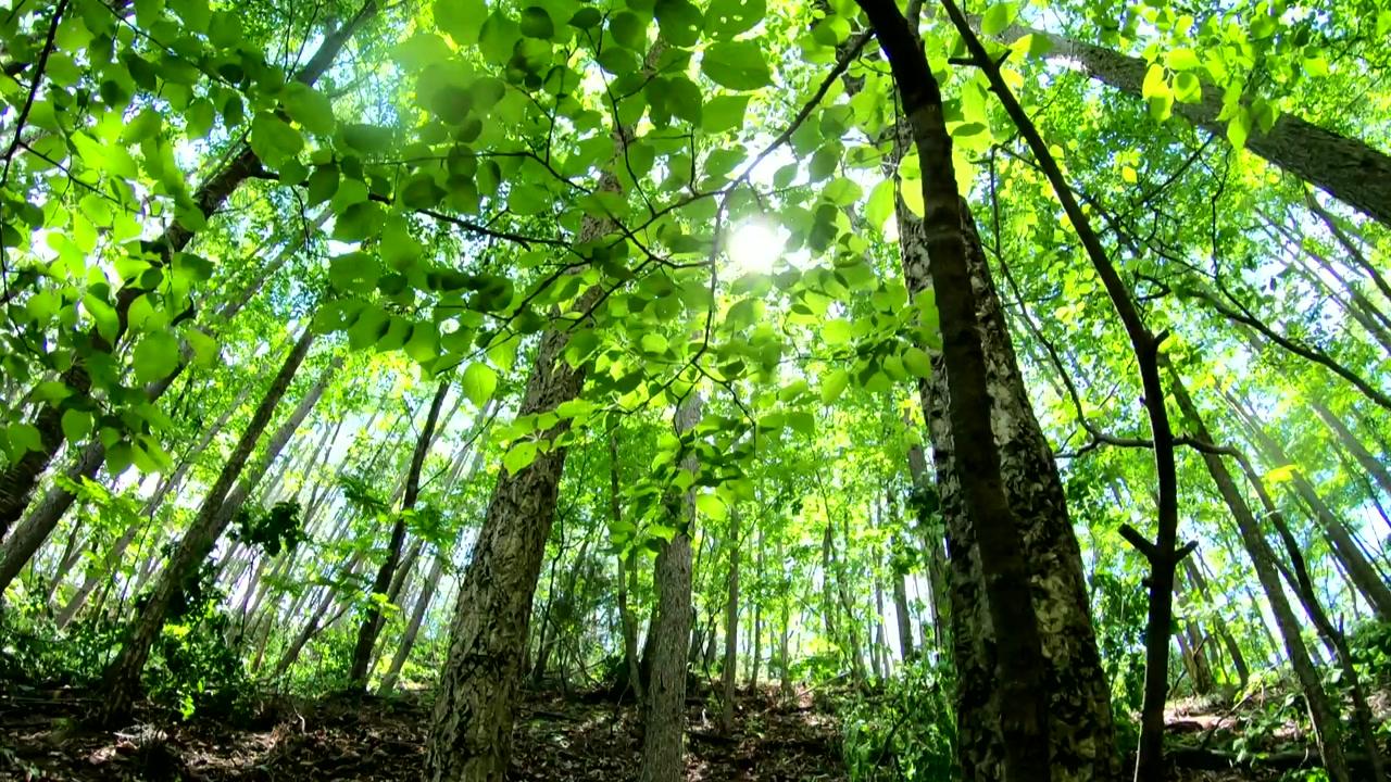 [사회]2050 년까지 30 억 그루의 나무 심기 … 3400 만 톤의 탄소 감축