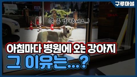 [구루마블] 아침마다 병원에 오는 강아지, 그 이유는...?