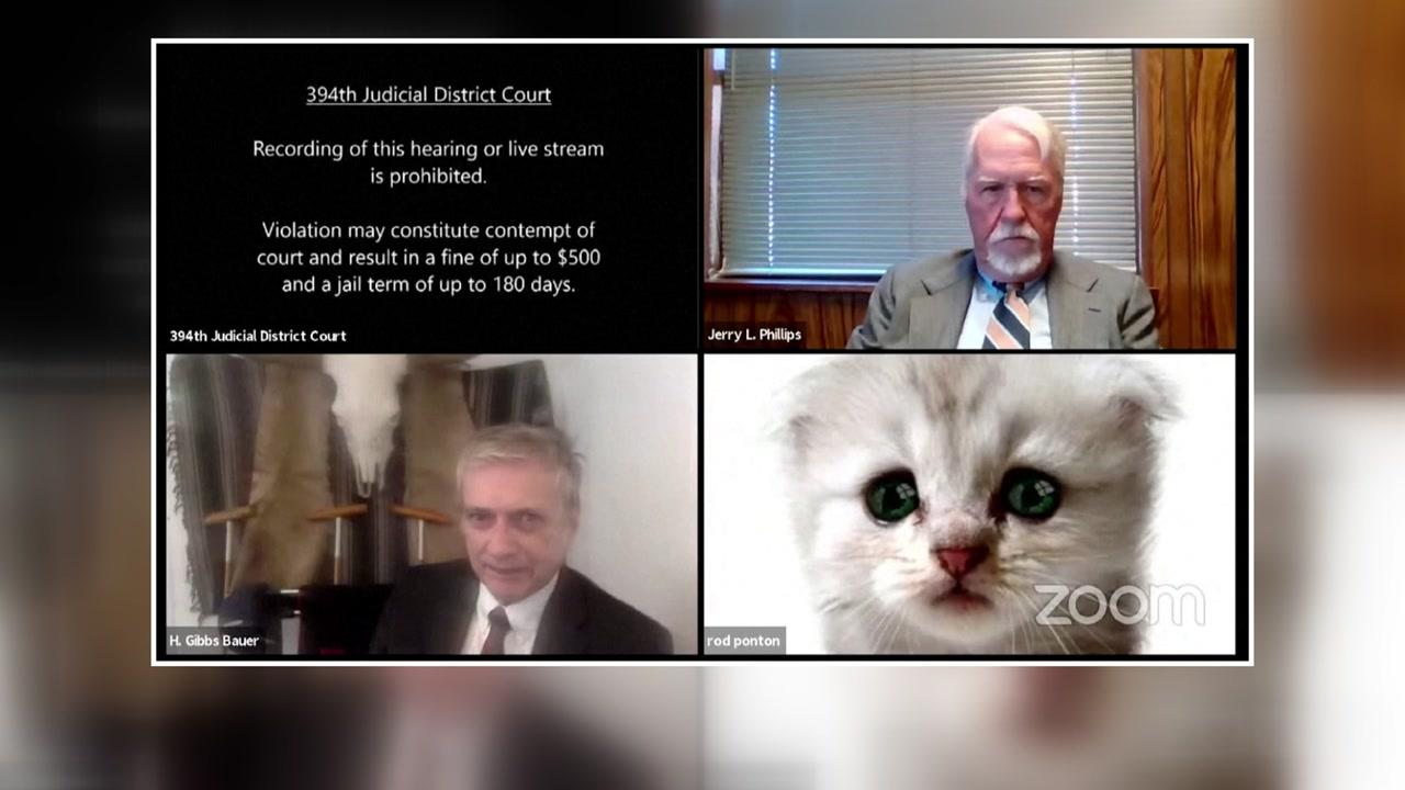 """[국제]""""판사, 나는 고양이가 아니야""""화상 회의 중 변호사의 귀여운 실수"""