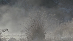 [날씨] 막바지 한파 내일 풀려...동해안 강풍에 '산불 비상'