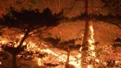 [날씨] 건조경보 영동에 '양간지풍' 겹친다...대형산불 비상
