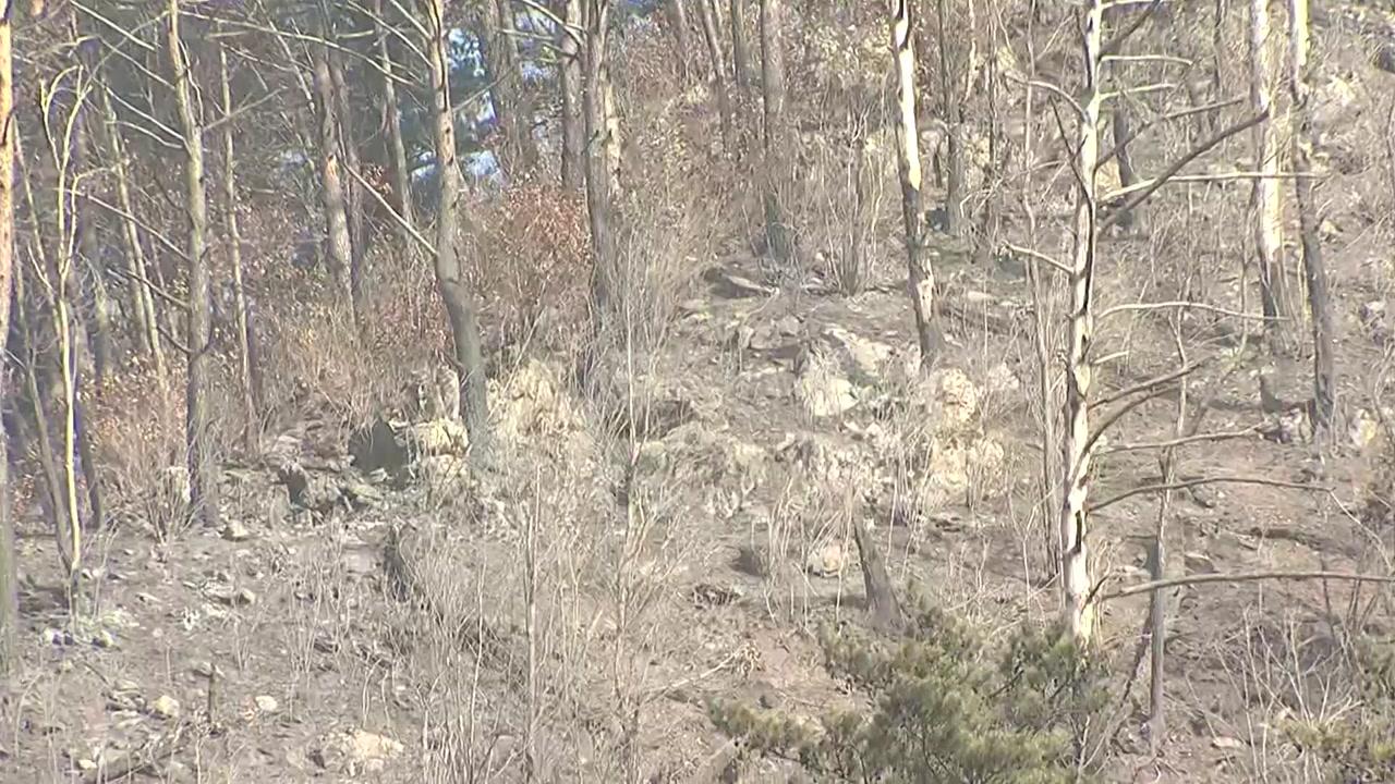 [전국]오후 늦게 발생 해 우려했던 정선 화재가 18 시간 만에 진압