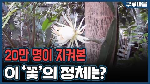 [구루마블] 20만 명이 실시간으로 지켜본 이 꽃의 정체는?