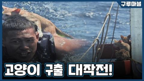 [구루마블] 침몰한 배 안에 고양이가!?