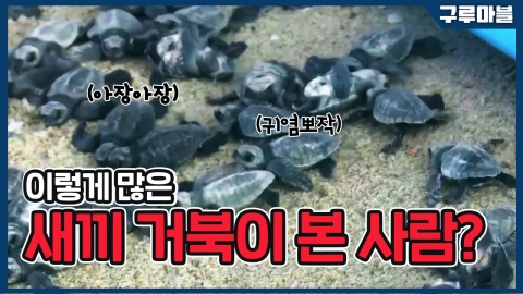 [구루마블] 이렇게 많은 새끼 거북이 본 사람?