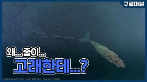 [구루마블] 왜 줄이 고래한테...?