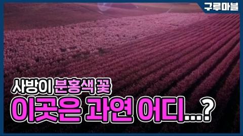 [구루마블] 사방이 분홍색 꽃, 이곳은 과연 어디...?