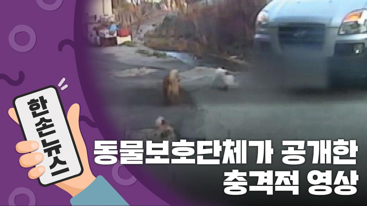 [15초 뉴스] 동물보호단체가 공개한 충격적 영상...유기견에게 무슨 일이?