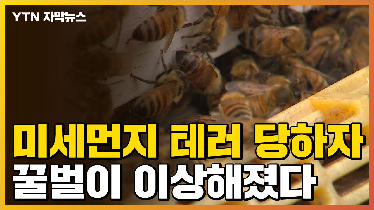 [자막뉴스] 초 미세 먼지에 노출 된 벌 … 충격적인 변화가 나타난다