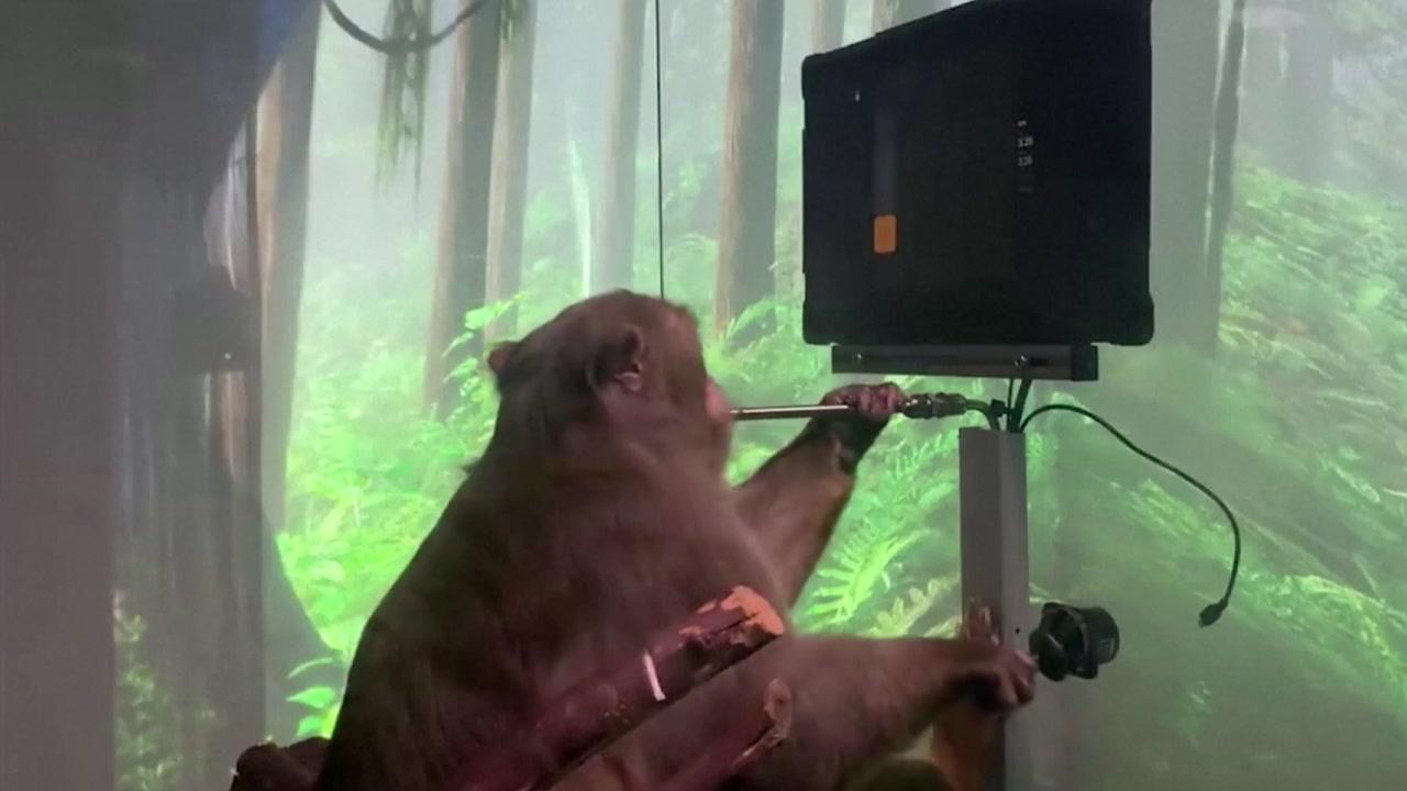 [국제]두뇌에있는 컴퓨터 칩을 가진 원숭이