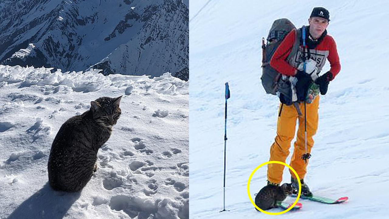 등산객 따라 해발 3,000m 산 오른 고양이, 알고 보니…