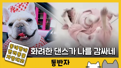 [동반자] 패션천재 강아지의 숨겨진 비보잉 실력