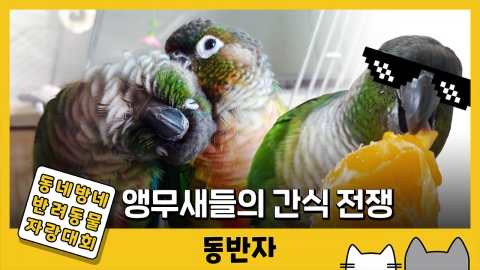 [동반자] '먹을 건 양보 못 해!' 앵무새들의 간식 전쟁