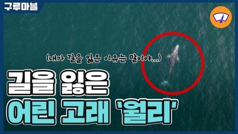 [구루마블] 길을 잃은 어린 고래 '월리'