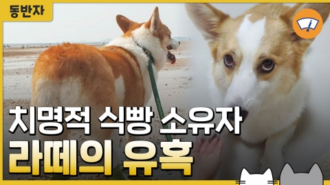 치명적 식빵 소유자 라떼의 유혹 [동반자]