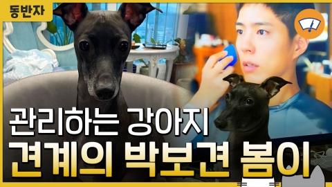 관리하는 강아지 견계의 박보견 봄이 [동반자]