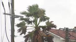 [날씨] 비바람 강해진 서귀포...제주도 전 지역 태풍주의보