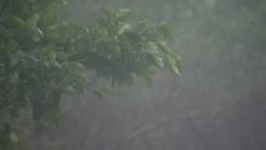 [날씨] 태풍 남해 상 지나 대한해협 통과...점차 남해안 비바람