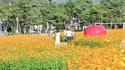 가을꽃향기 물씬 '청송 정원'