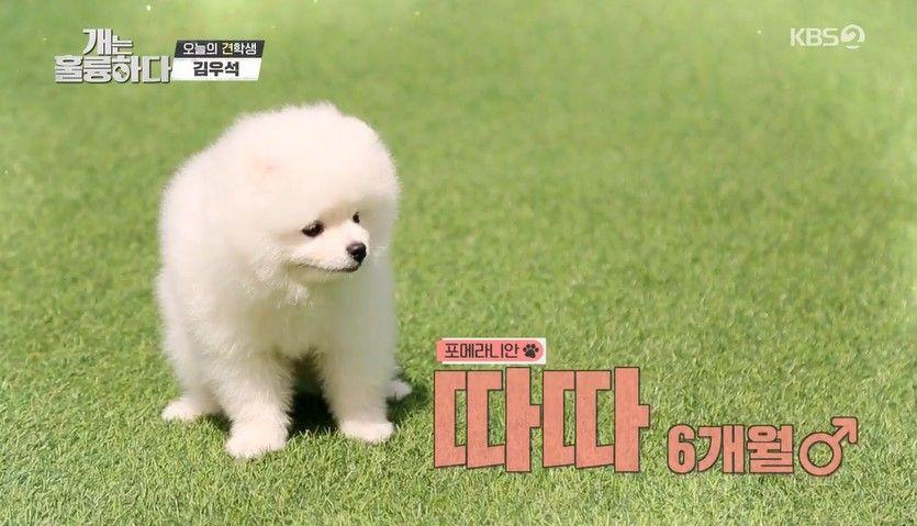 '개는 훌륭하다' 김우석, 닮은꼴 반려견 따따 소개... 이유비, 초음파 발사