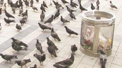 [4회 본방] 평화의 상징에서 천덕꾸러기가 된 비둘기!