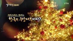 '크리스마스트리'가 한국의 토종 나무?