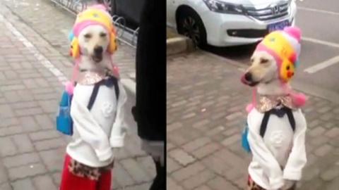 가방 매고 학교 가는 개…'○○○세상'