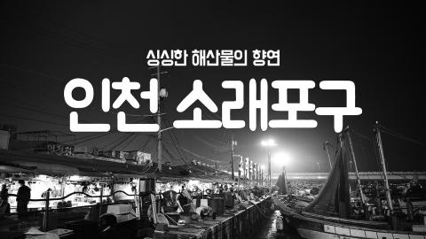 [YTN 구석구석 코리아] 제2회 '인천 소래포구' 편